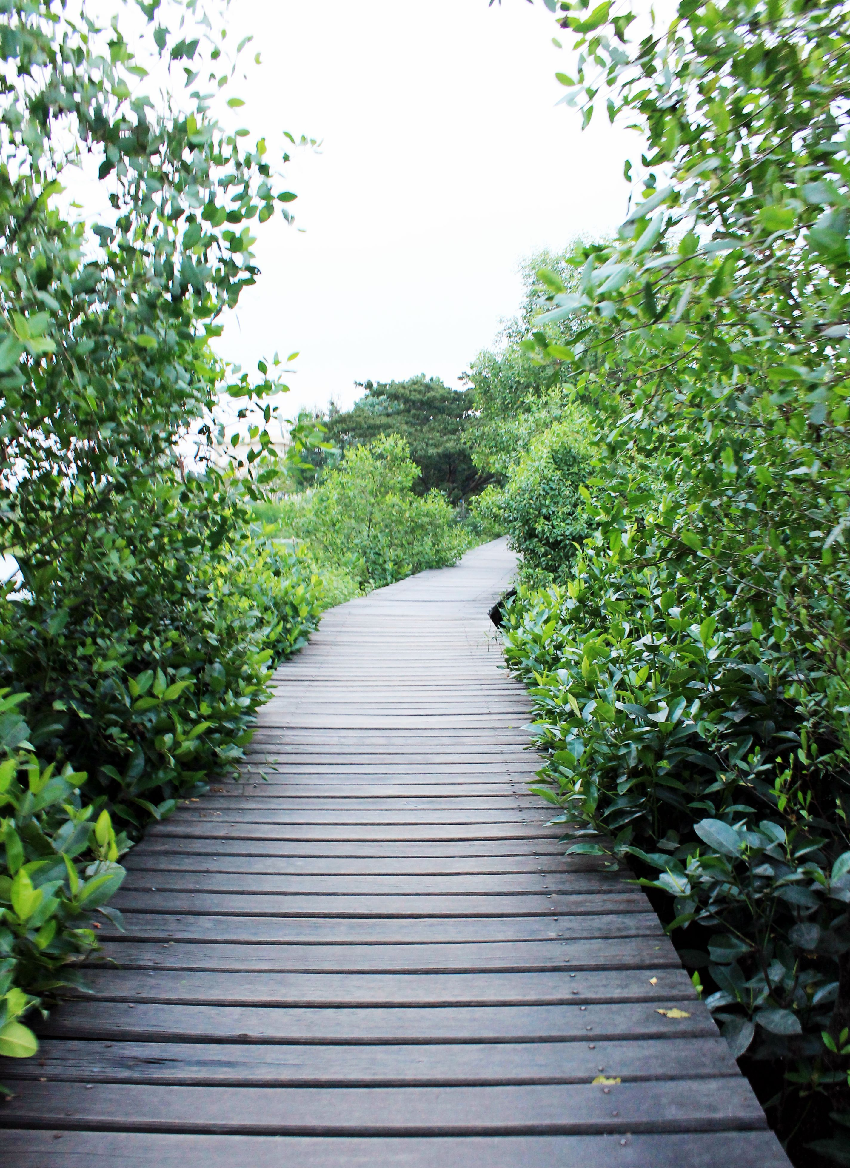 Wisata Mangrove Wonorejo Surabaya Info Hutan Terbilang Rimbun Kalian Masuk