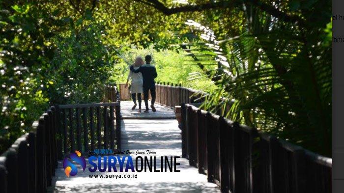 Wisata Mangrove Wonorejo Surabaya Makin Cantik Frame Bambu Masuk Lokasi