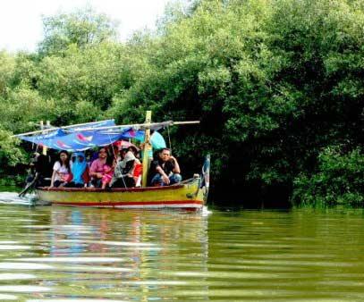 Wisata Surabaya Petualangan Hutan Mangrove Wonorejo Tempat Terbaik Indonesia Kota