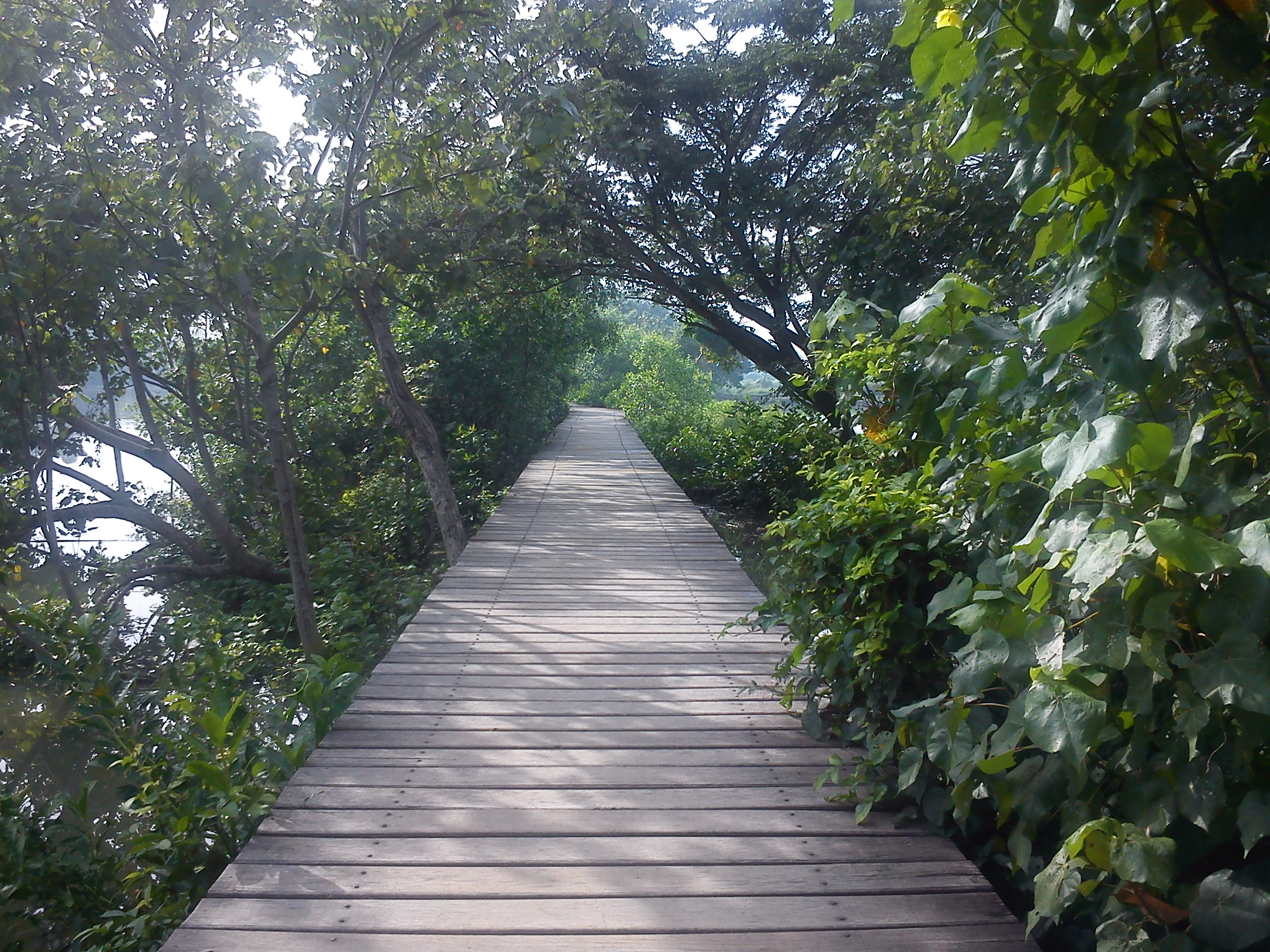 Wonorejo Mangrove Ecotourism Dolan Dolen Wisata Hutan Kota Surabaya