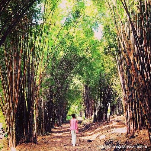 20 Tempat Wisata Surabaya Bagus Terkenal Zona Libur Kebun Bambu