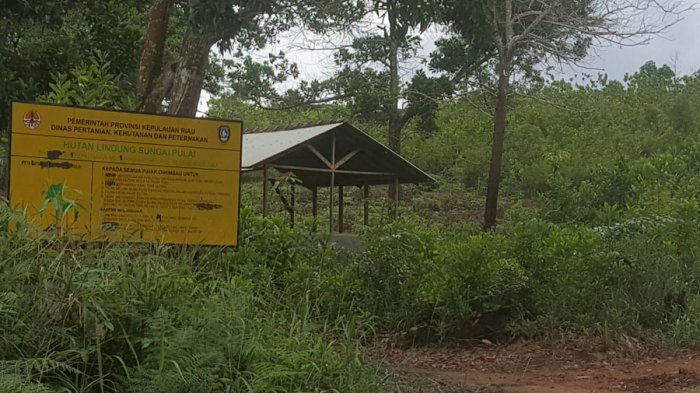 Terungkap Tanjungpinang Utang Ruang Hijau Sebesar Siasat Pemko Taman Batu