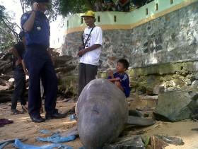 Lumba Terdampar Dekat Tugu Pensil Tanjungpinang Tribun Batam Kota