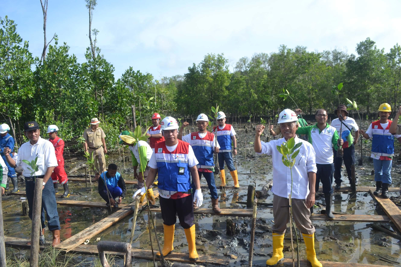 Peduli Lingkungan Pertamina Tanam 5 000 Bibit Mangrove Radar Tarakan