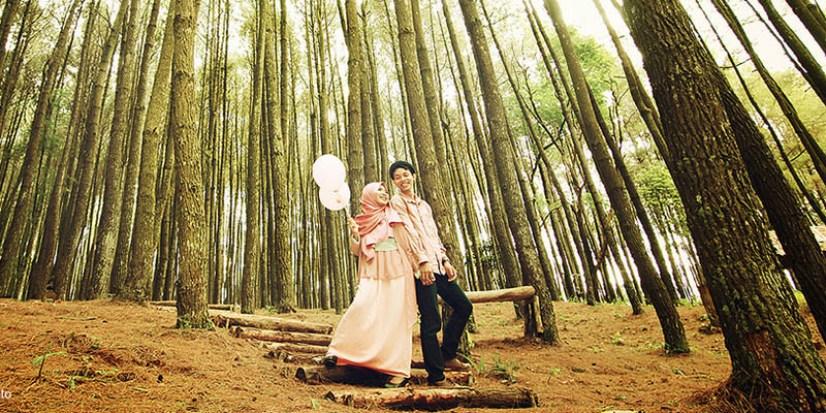Pohon Pinus Merkusii Hutan Habitat Sebaran 6 3 Wisata Persemaian
