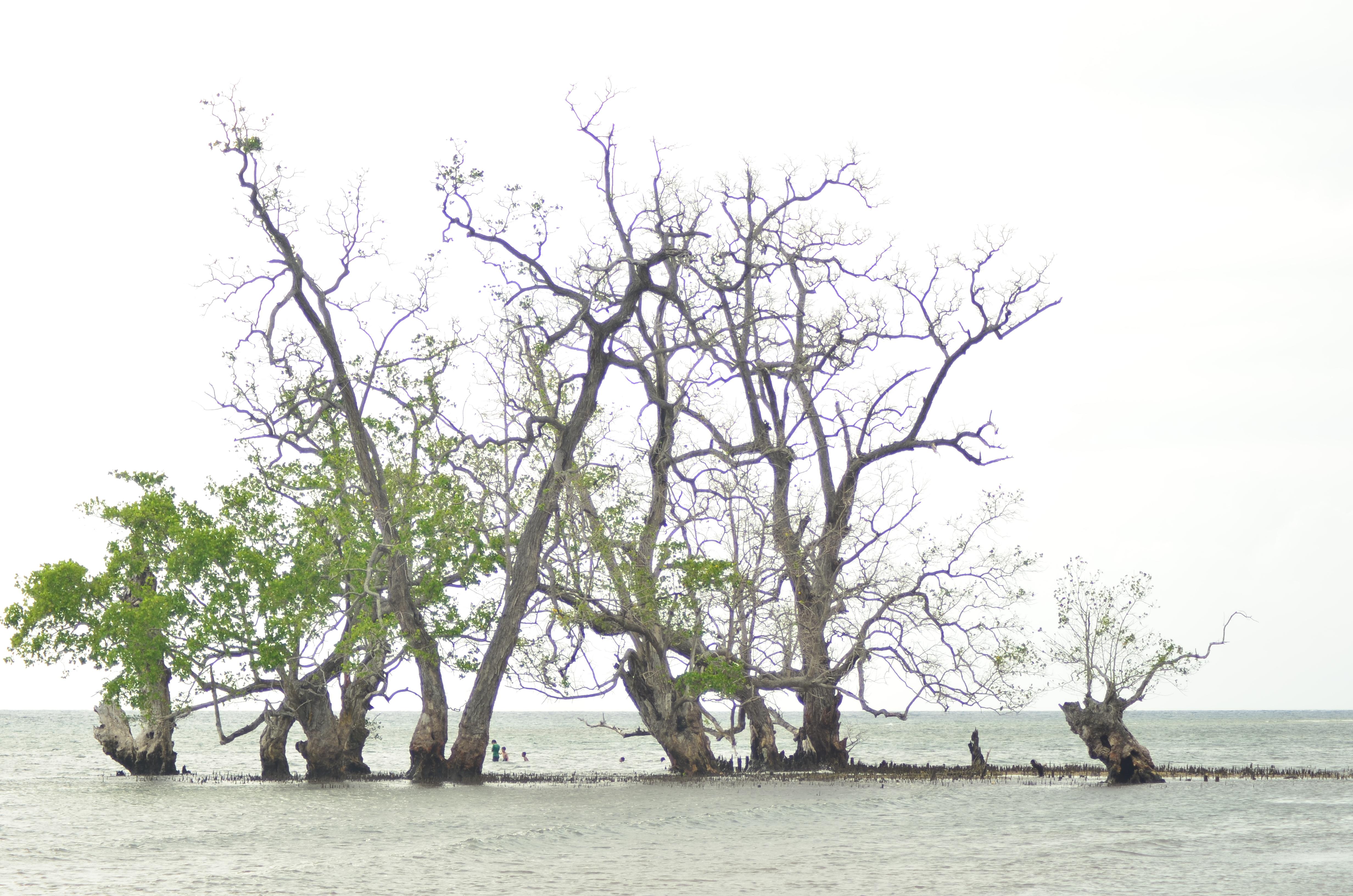 Pantai Kastela Ternate Tampurungnya Kantai Kota