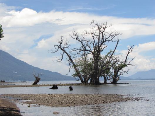 Solo Travel Ternate Lolipop Box Satu Pohon Unik Pantai Kastela