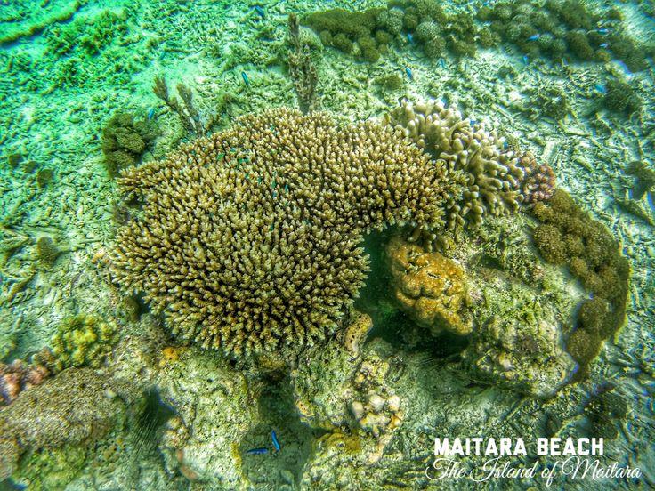 8 Maitara Beach Island Ternate Indonesia Images Snorkling Hobby Travelling