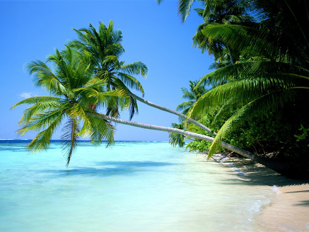 Pantai Pasir Terhalus Dunia Indonesia Panjang Kota Tual
