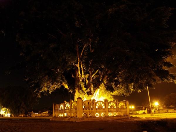 Mitos Beringin Kembar Alun Kidul Yogyakarta Kota