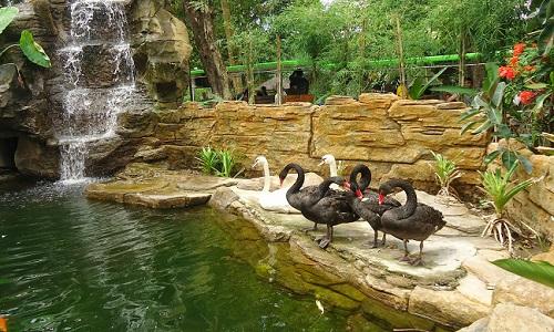 12 Fasilitas Kebun Binatang Gembira Loka Jogja Wisatania Bonbin Yogyakarta