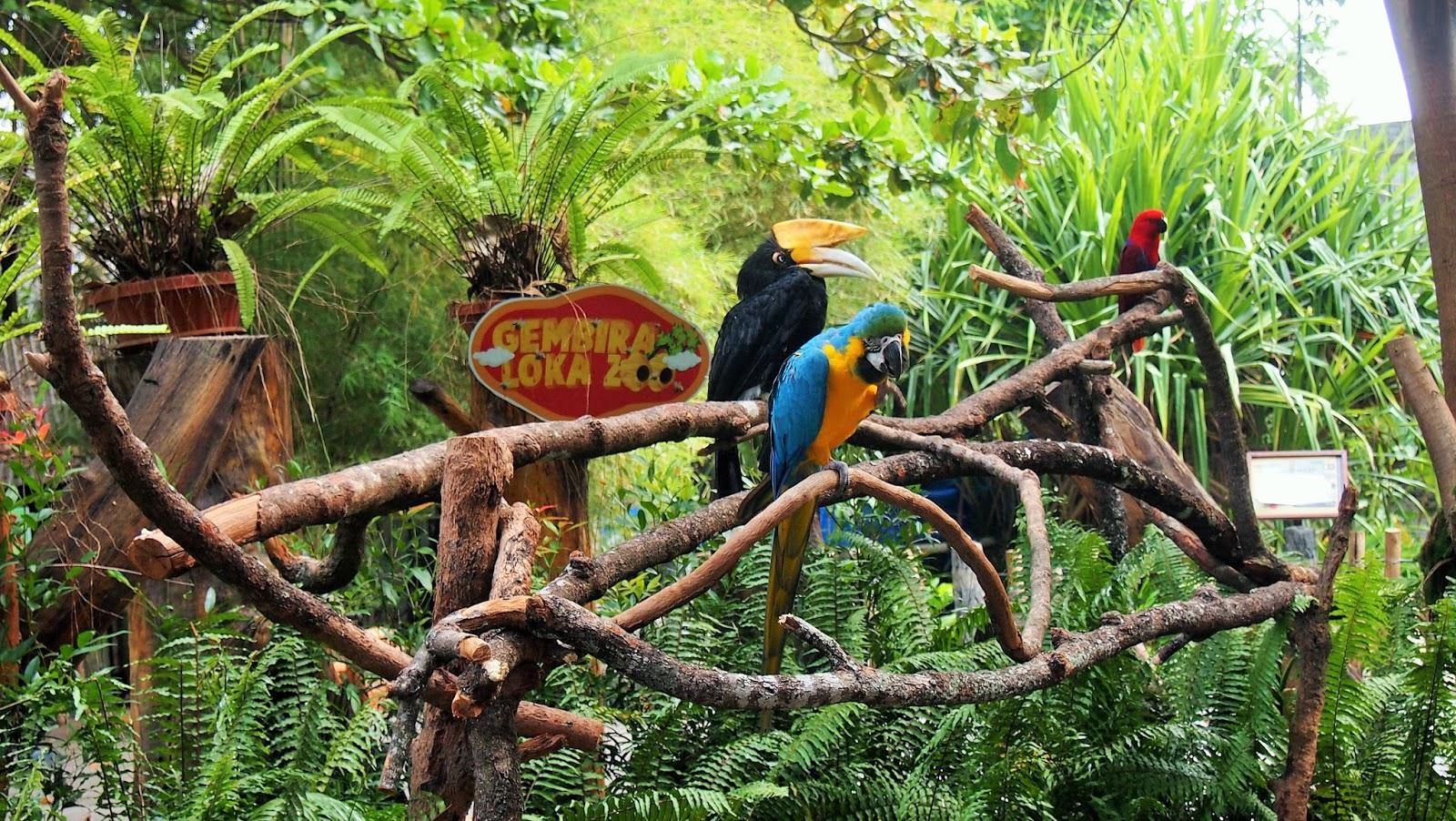 Amadea Pradhipta Berjumpa Binatang Gembira Loka Zoo Beralamat Jalan Kebun