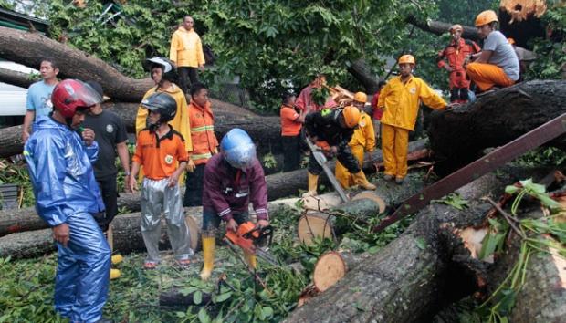 Angin Ribut 2 Pengunjung Gembira Loka Tewas Tertimpa Pohon Sejumlah