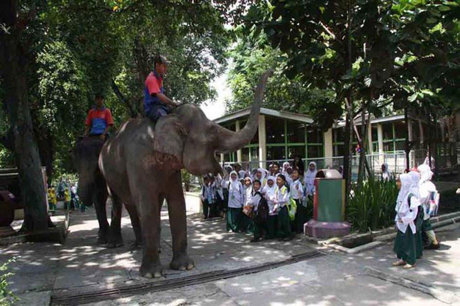 Gembira Loka Zoo Rental Mobil Jogja Murah Harga Sewa Rp