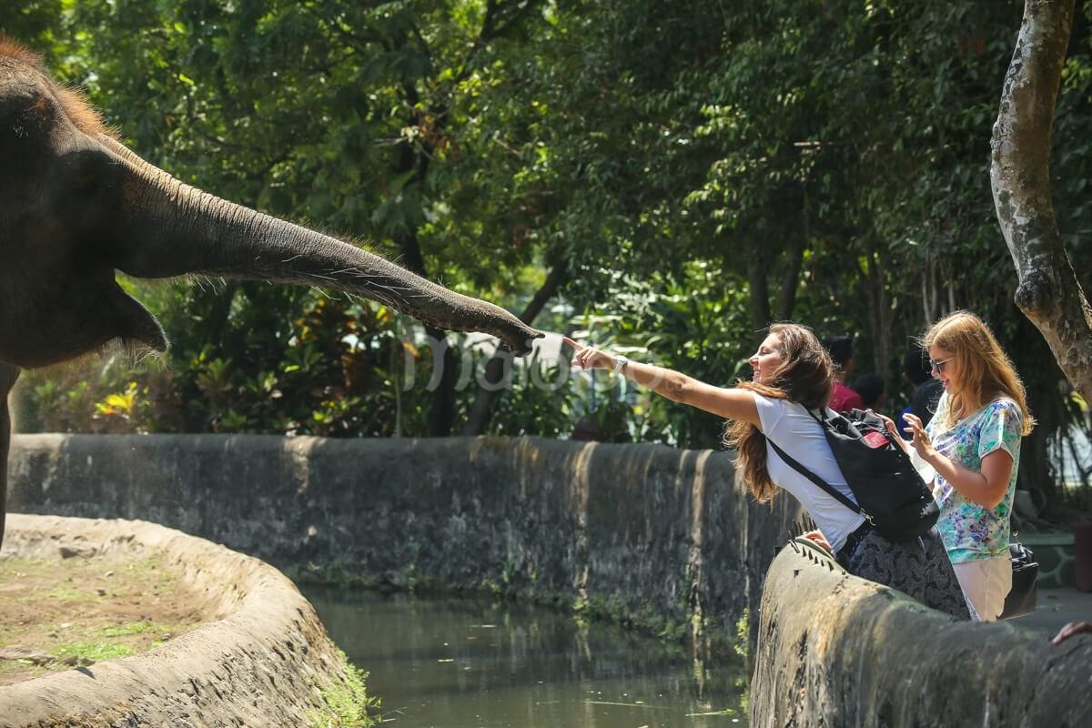 Gembira Loka Zoo Sepotong Rimba Tengah Kota Interaksi Gajah Pengunjung