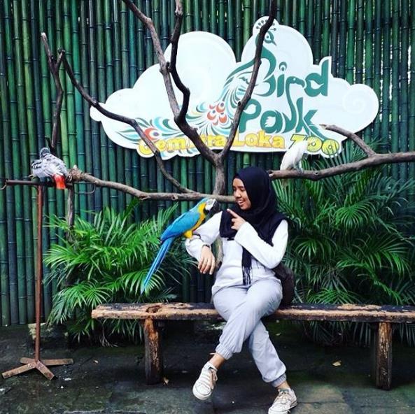 Harga Tiket Masuk Kebun Binatang Gembira Loka Burung Bonbin Yogyakarta