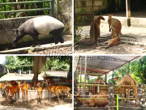 Jogja Istimewa Gembira Loka Zoo Terletak Pinggiran Kota Yogyakarta Kebun