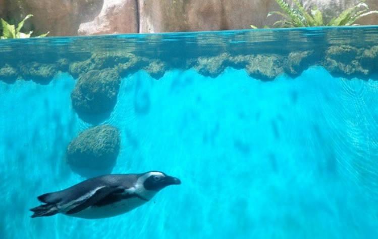 Kebun Binatang Gembira Loka Jogja Bukan Sekedar Bonbin Harga Tiket