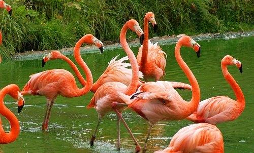 Kebun Binatang Gembira Loka Jogja Bukan Sekedar Bonbin Yogyakarta Kota