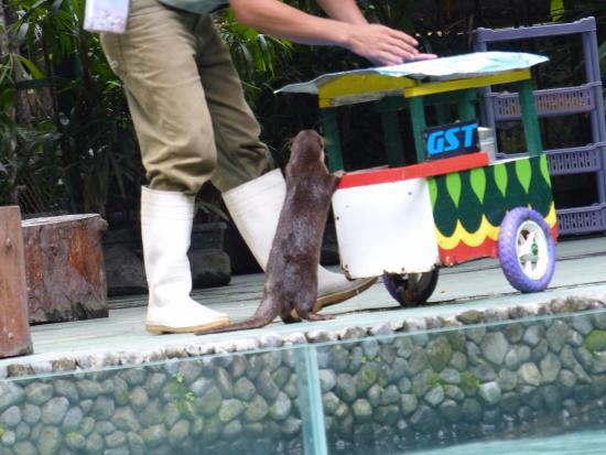 Kebun Binatang Gembira Loka Picture Zoo Bonbin Yogyakarta Kota