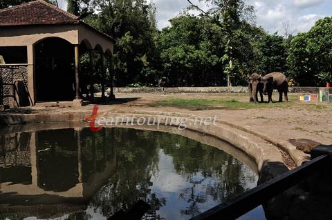 Kebun Binatang Gembira Loka Salah Satu Wisata Andalan Kota Koleksi