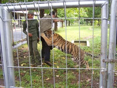 Kebun Binatang Gembira Loka Yogyakarta Bonbin Kota