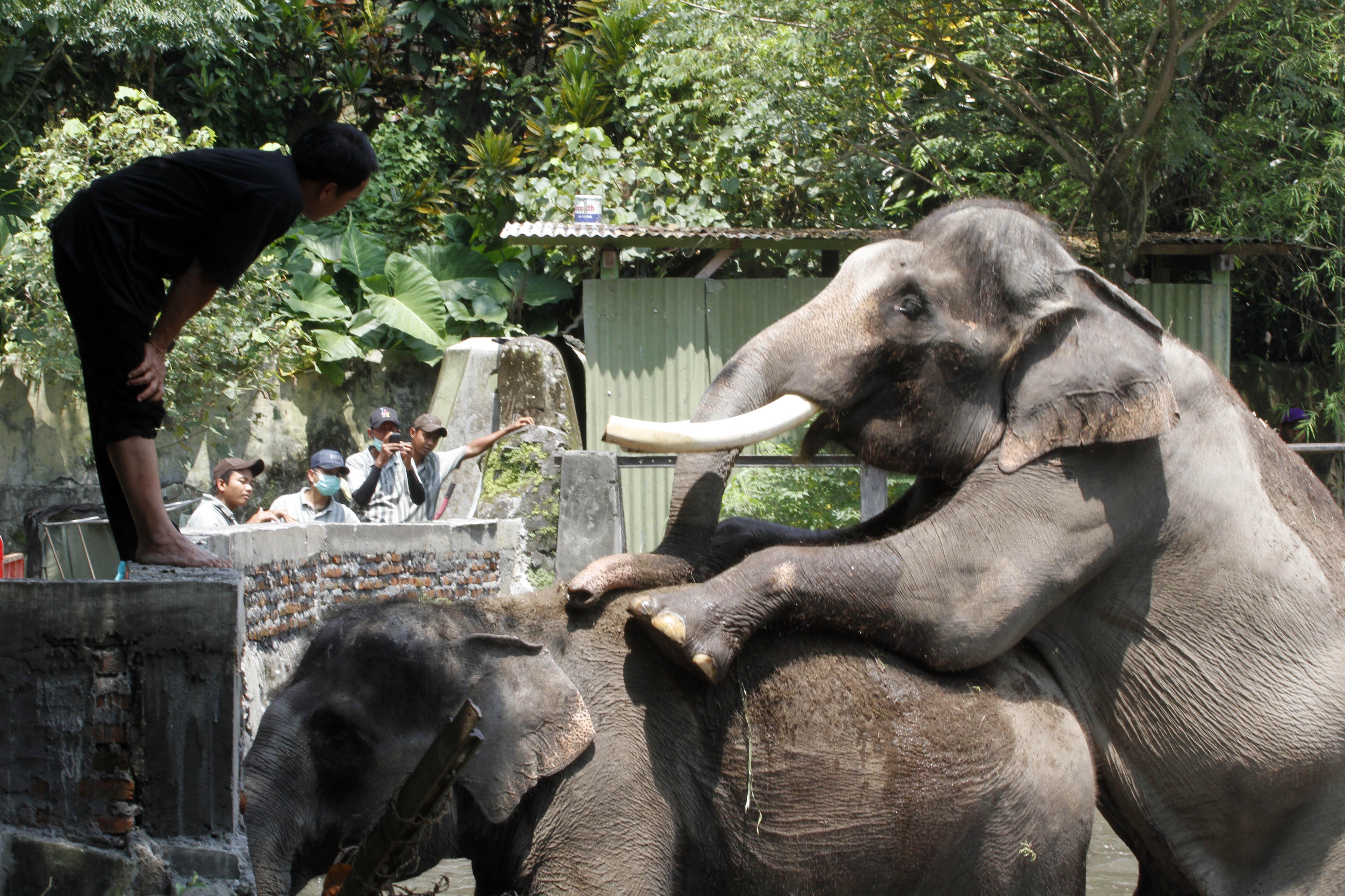 Kebun Binatang Gembiraloka Yogyakarta Berita Daerah Bonbin Gembira Loka Kota