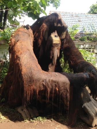 Kingkong Picture Gembira Loka Zoo Yogyakarta Tripadvisor Bonbin Kota