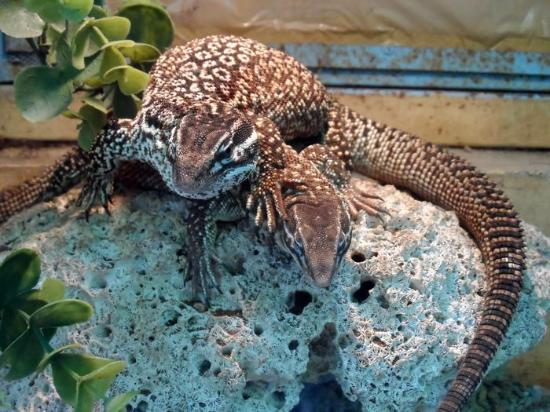 Koleksi Reptil Kb Gembira Loka Picture Zoo Bonbin Yogyakarta Kota
