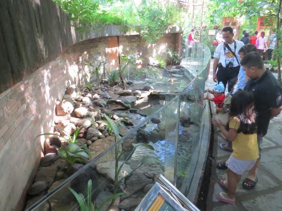 Koleksi Reptil Picture Gembira Loka Zoo Yogyakarta Tripadvisor Bonbin Kota