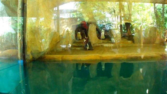 Lihat Pinguin Bonbin Gembira Loka Yogyakarta Darmawan Blog 7 Kota