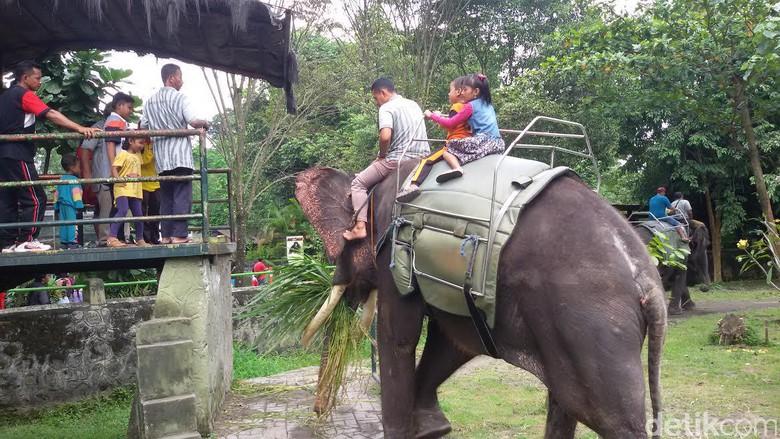 Nyepi Bonbin Gembira Loka Yogyakarta Dipadati Pengunjung Liburan Kota