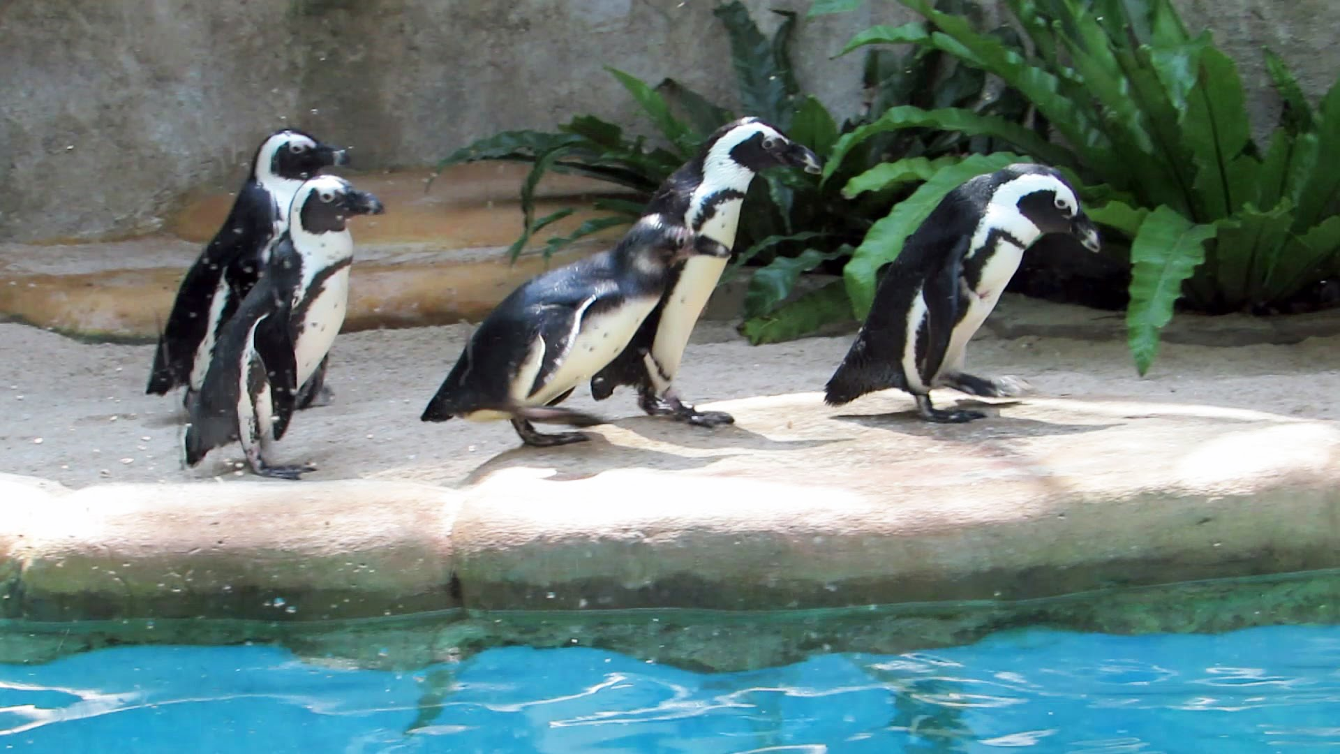 Pinguin Kebun Binatang Gembira Loka Jogja Indonesia Youtube Bonbin Yogyakarta