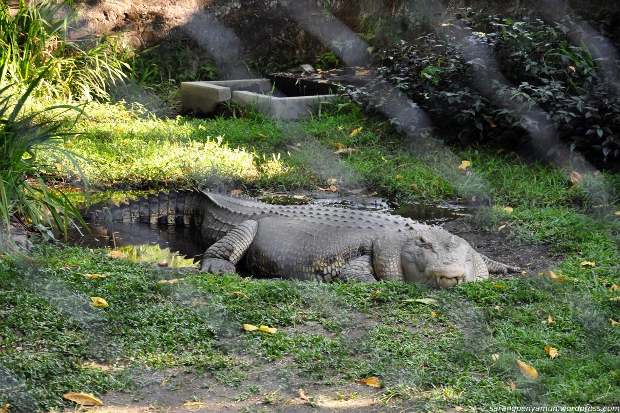 Sih 4 Kebun Binatang Terbaik Indonesia Mldspot Candi Pantai Indah