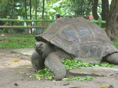 Tempat Wisata Kebun Binatang Gembira Loka Yogyakarta Cocok Mengisi Waktu