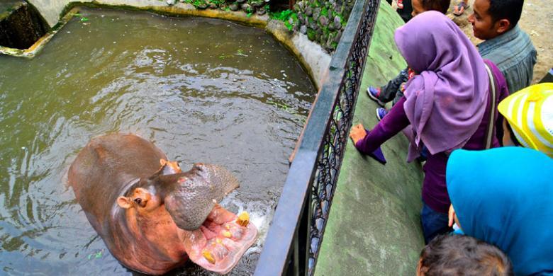 Tiket Gembira Loka Zoo Jogja Naik Selama Musim Liburan Kompas