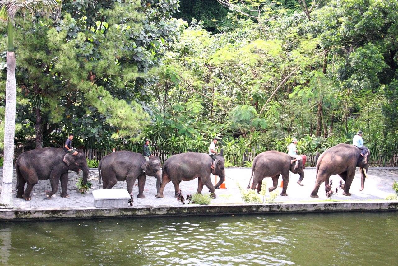 Wahanawisata Kebun Binatang Gembira Loka Sebuah Bonbin Faforit Berada Area