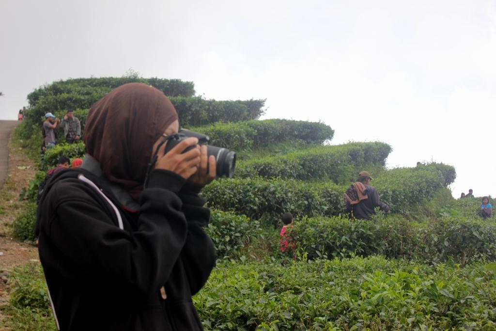 Kebun Teh Nglinggo Air Terjun Watu Jonggol Kulon Progo Objek