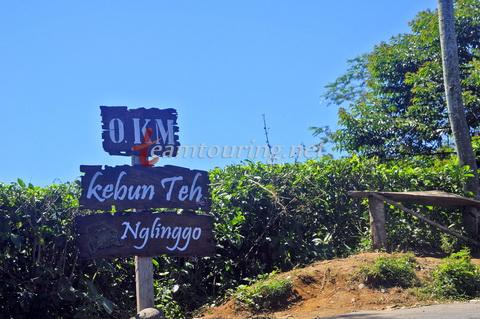 Kebun Teh Nglinggo Asyiknya Wisata Jogja Teamtouring Titik 0 Km