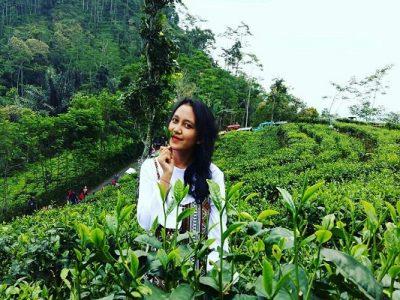 Kebun Teh Nglinggo Kulonprogo Yogyakarta Wisata Alam Samigaluh Kota