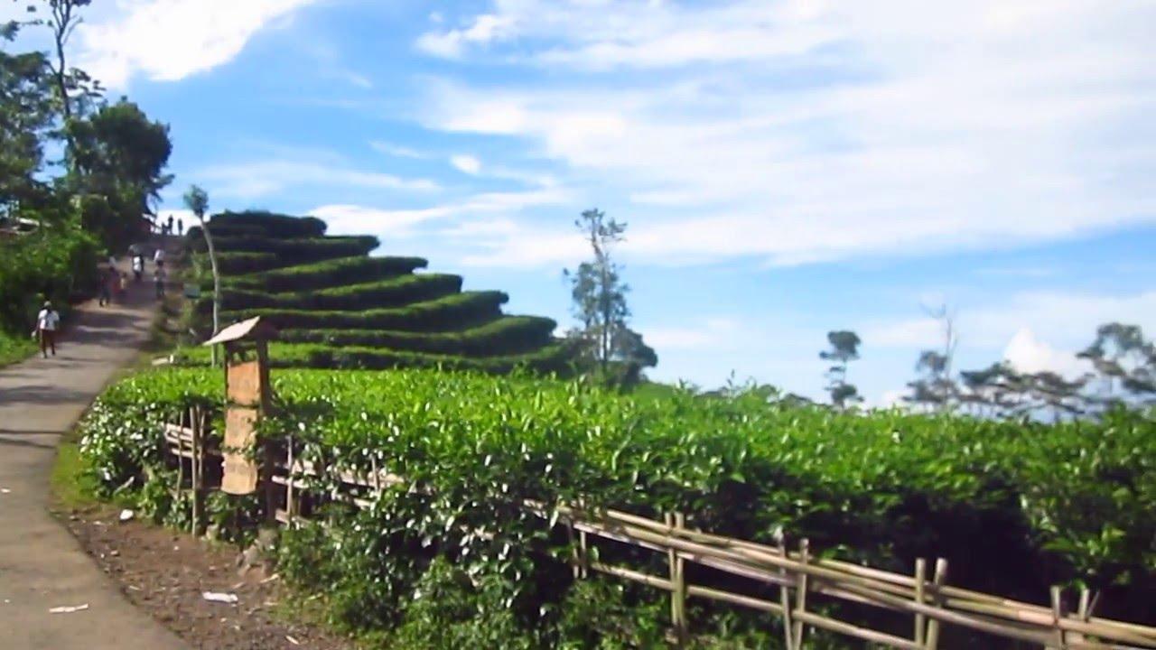 Kebun Teh Nglinggo Samigaluh Kulonprogo Yogyakarta Youtube Kota