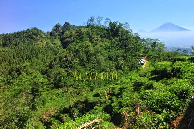 Kebun Teh Nglinggo Satu Satunya Yogyakarta Catatan Nobi Setelah Puas