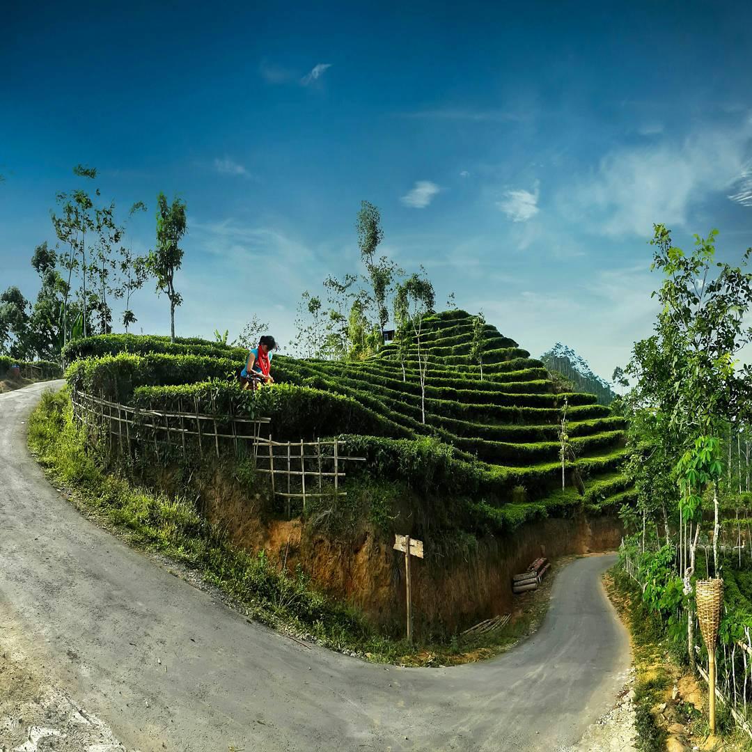 Lokasi Kebun Teh Nglinggo Samigaluh Kulon Progo Yogyakarta Brothersjournal Kota