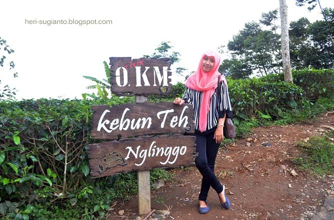 Menengok Kebun Teh Nglinggo Kulonprogo Yogyakarta Heri Terletak Pedukuhan Kelurahan