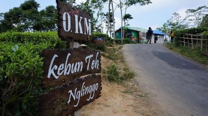 Paket Wisata Jogja 2017 Tour Kebun Teh Nglinggo Kota Yogyakarta