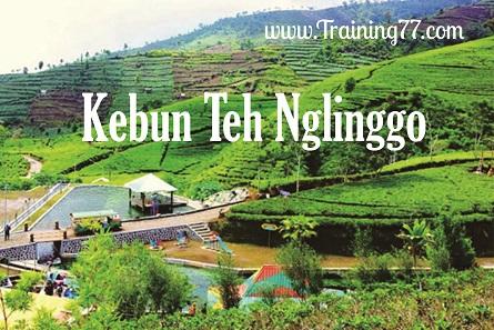 Panorama Indah Kebun Teh Nglinggo Kulon Progo Training77 Wisata Terletak