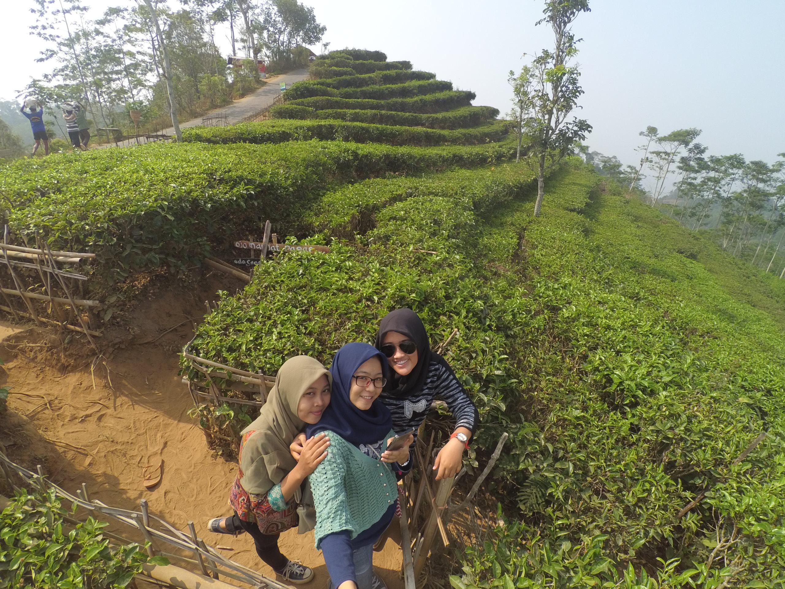 Pesona Kebun Teh Nglinggo Yogyakarta Rizki Rianafitri Selfie Kota