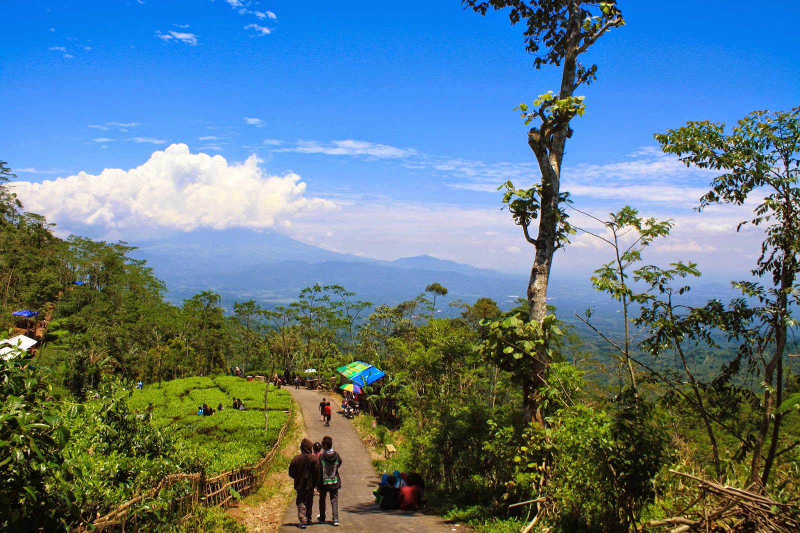 Rute Kebun Teh Nglinggo Foto Wisata Kota Yogyakarta