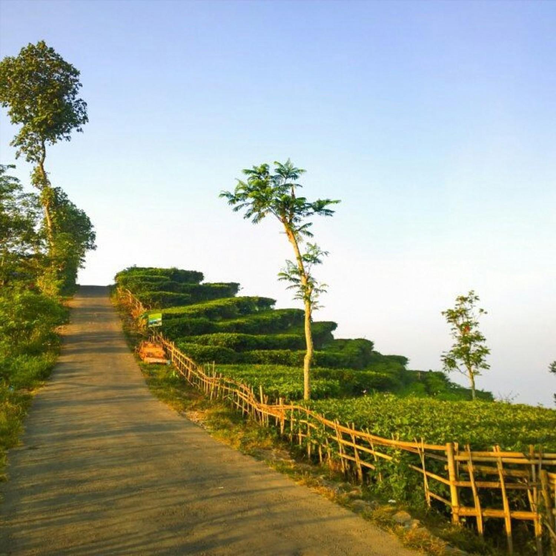 Travel Story Menikmati Secangkir Teh Hangat Kebun Nglinggo Buat Kamu