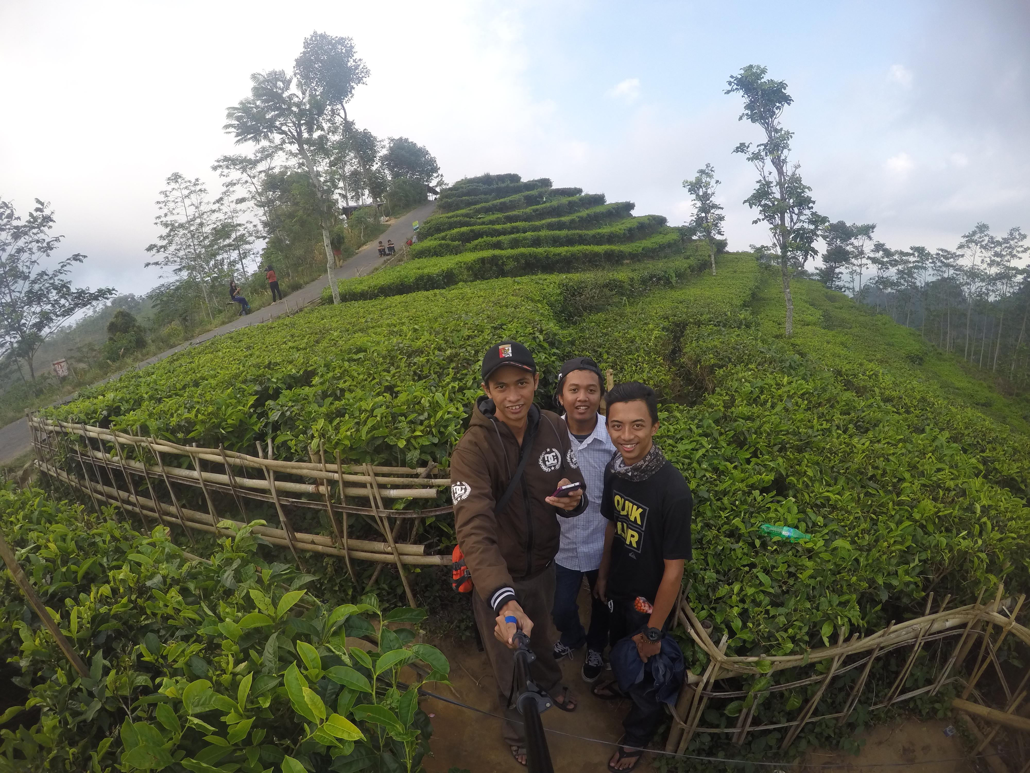 Wisata Kebun Teh Desa Nglinggo Kulon Progo Yogyakarta Singgahjogja Dcim100goprogopr3704